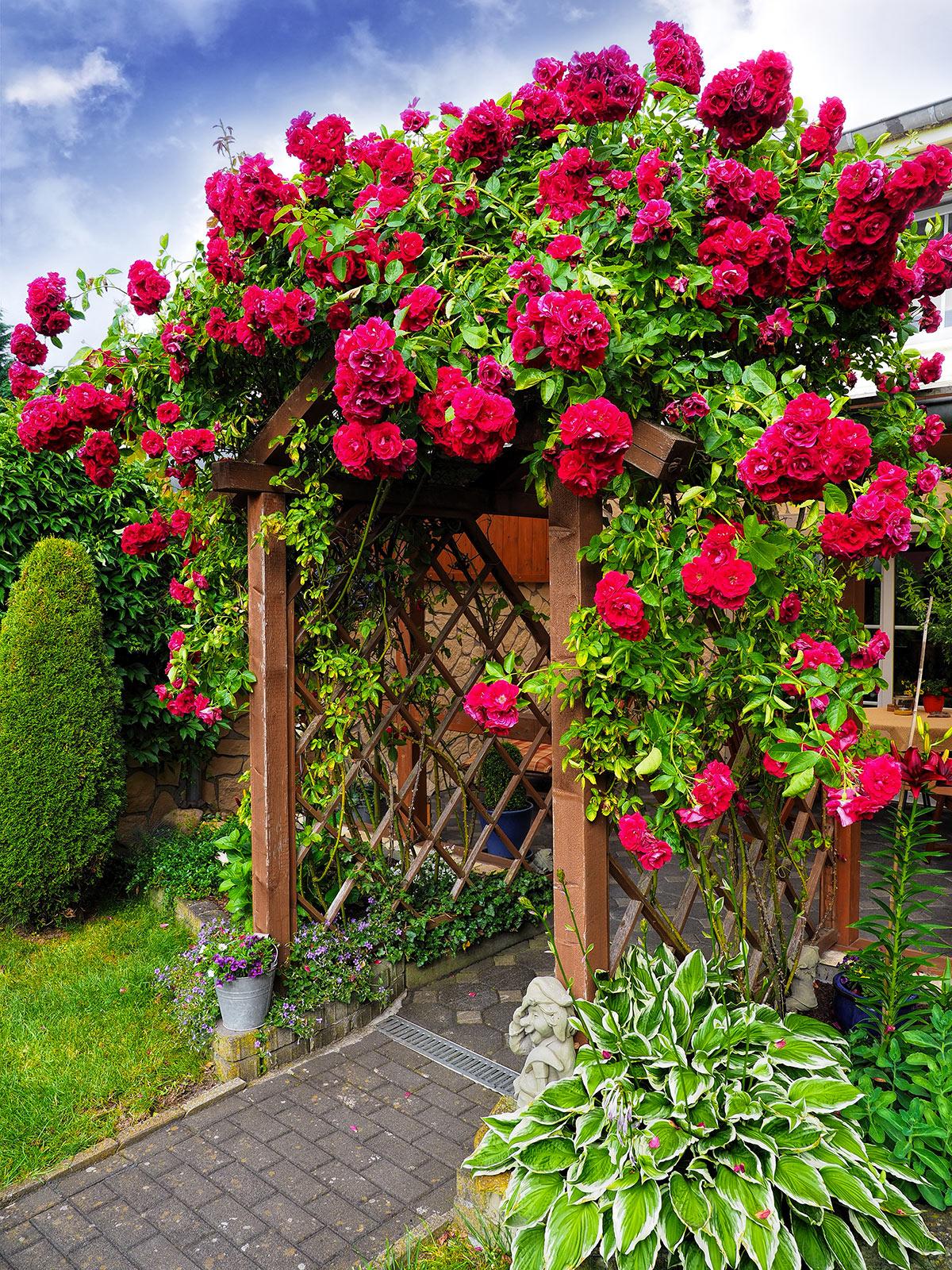 Pergolato in legno con rose rampicanti.