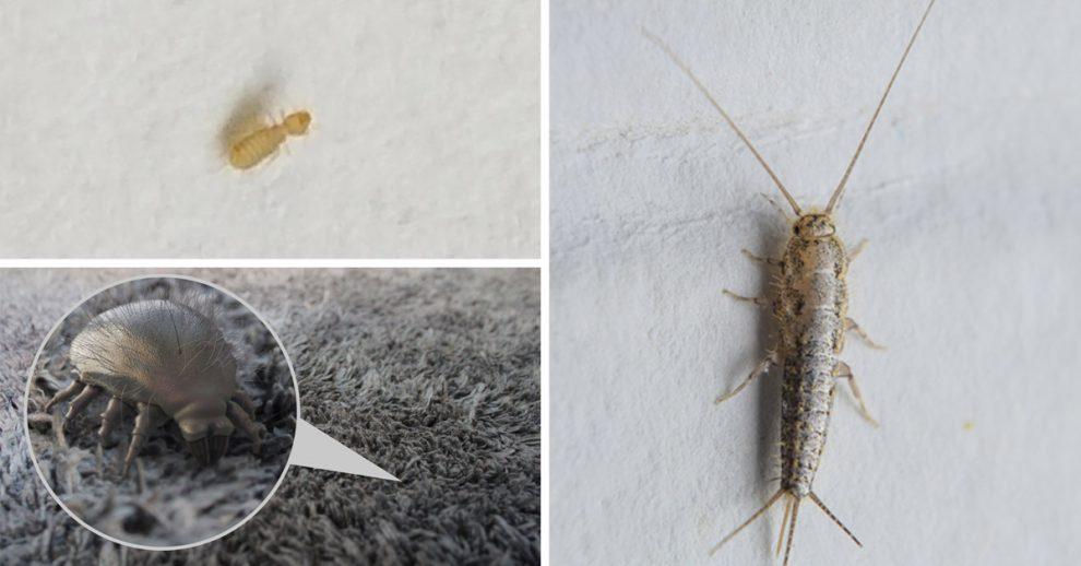 come eliminare insetti bianchi in casa.