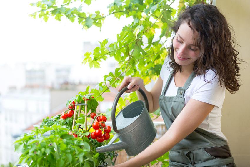 Ragazza innaffia pomodorini in vaso sul balcone.