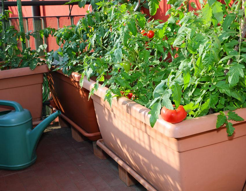 Come fare un orto sul balcone.