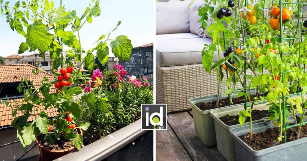 Come fare un orto sul balcone di casa