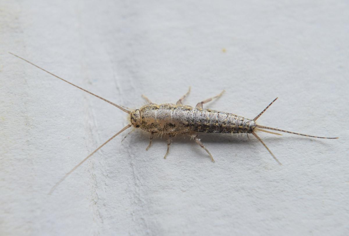 insetti bianchi 1
