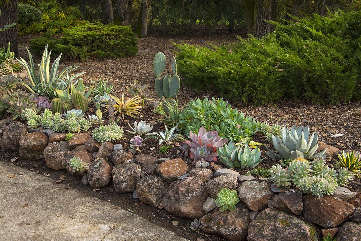 Giardino roccioso con piante grasse.