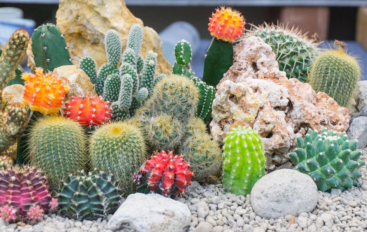 Bella composizione di piante grasse in giardino.