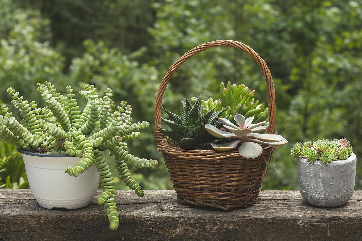 3 vasi con piante grasse.
