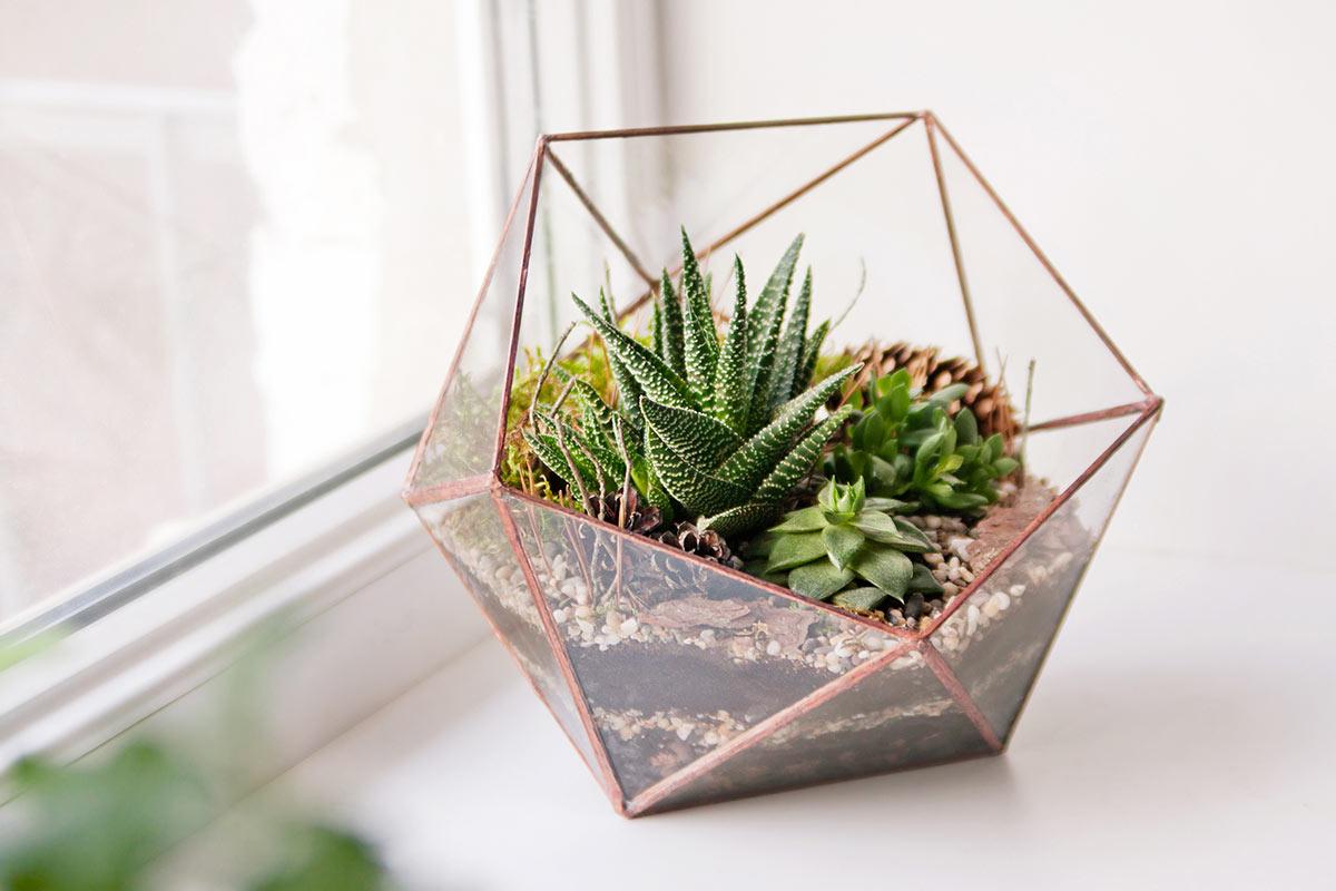 Vaso moderno design con composizione di piante grasse.