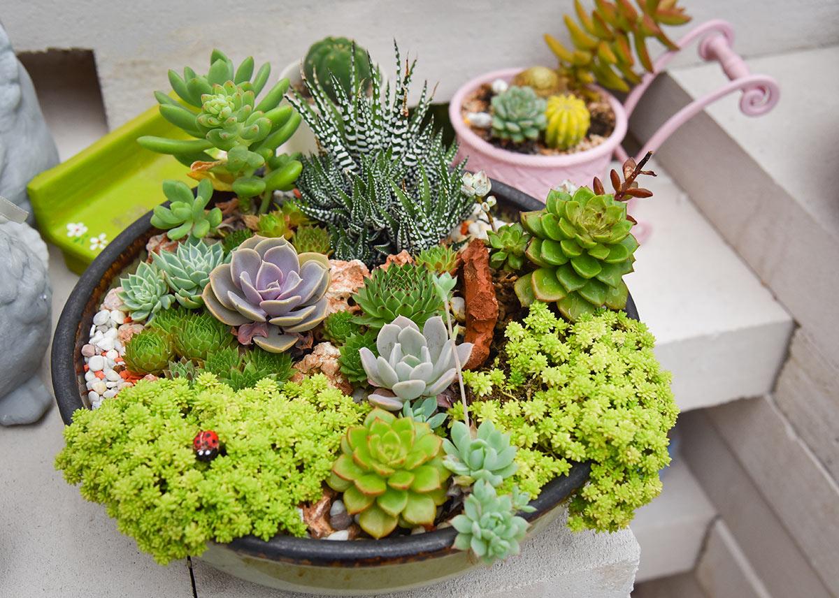 Composizione di piante grasse colorate.