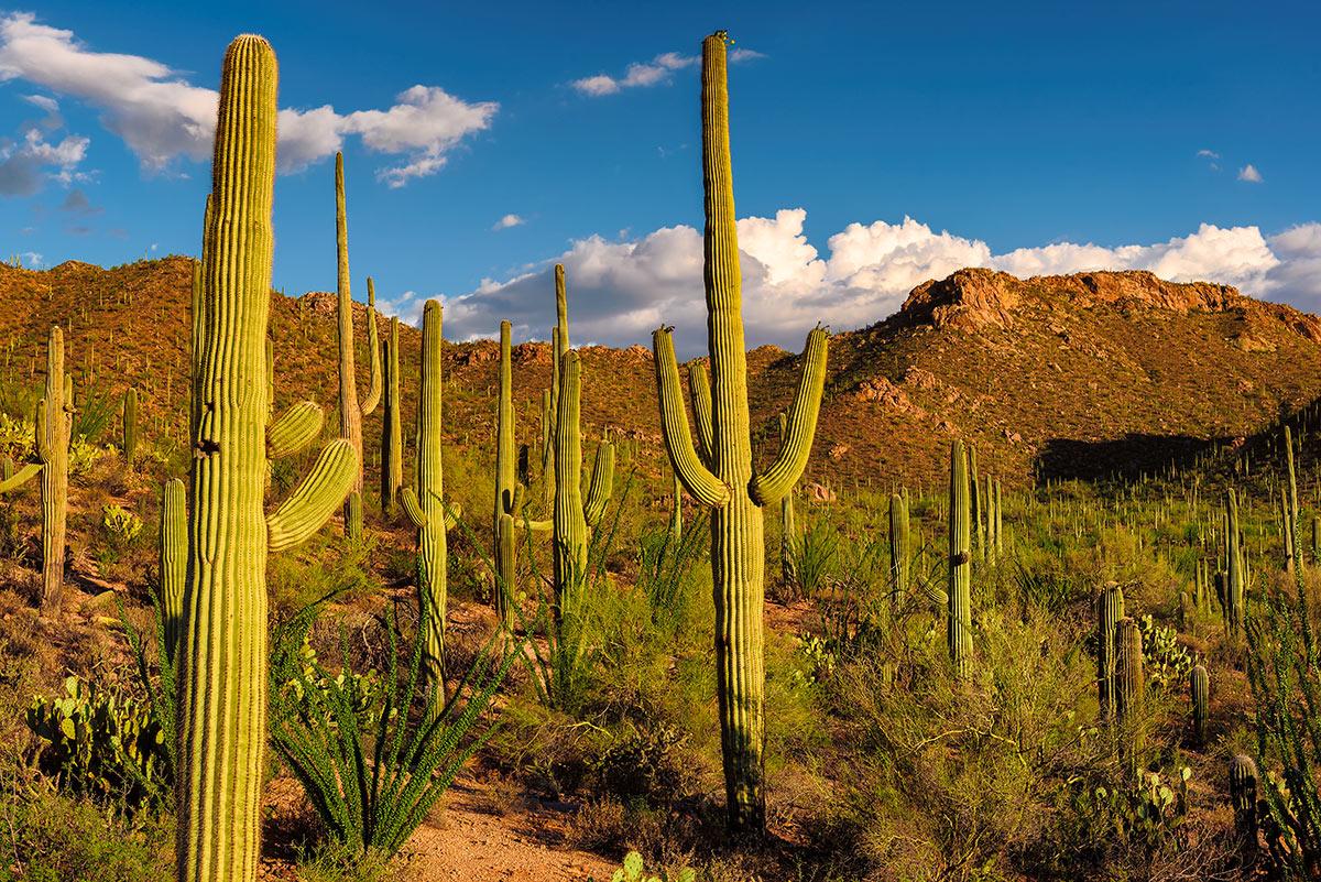 Cactus saguaro all'esterno.