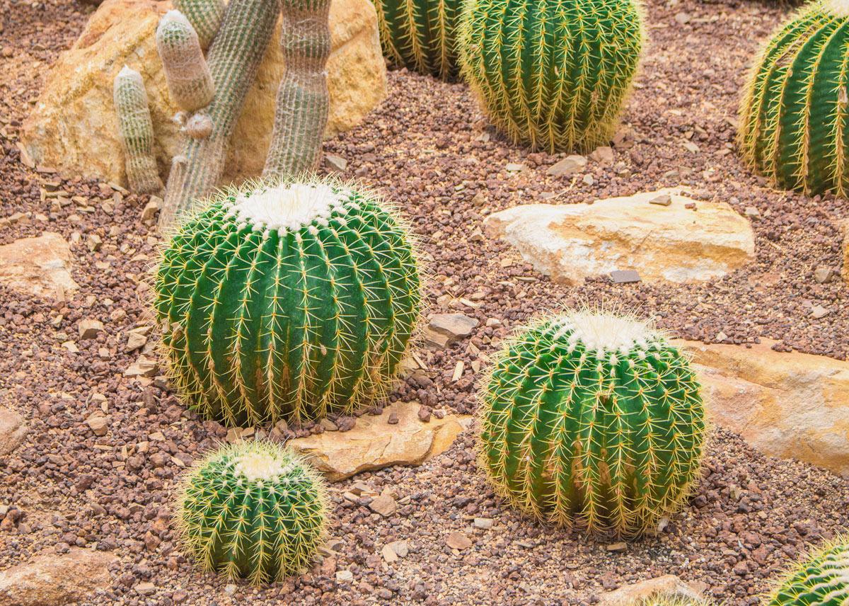 Piante Grasse Da Esterno piante grasse, nomi, fiori: ispirazioni per un tocco esotico