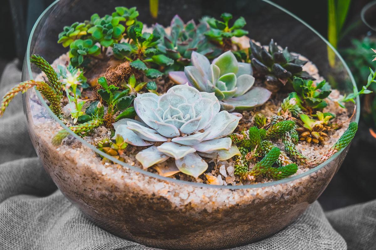 Piantine grasse in un vaso trasparente.