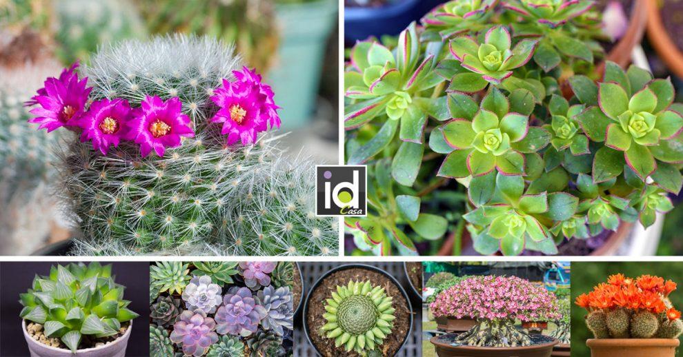 Piante grasse, nomi, fiori e ispirazioni per casa e giardino.