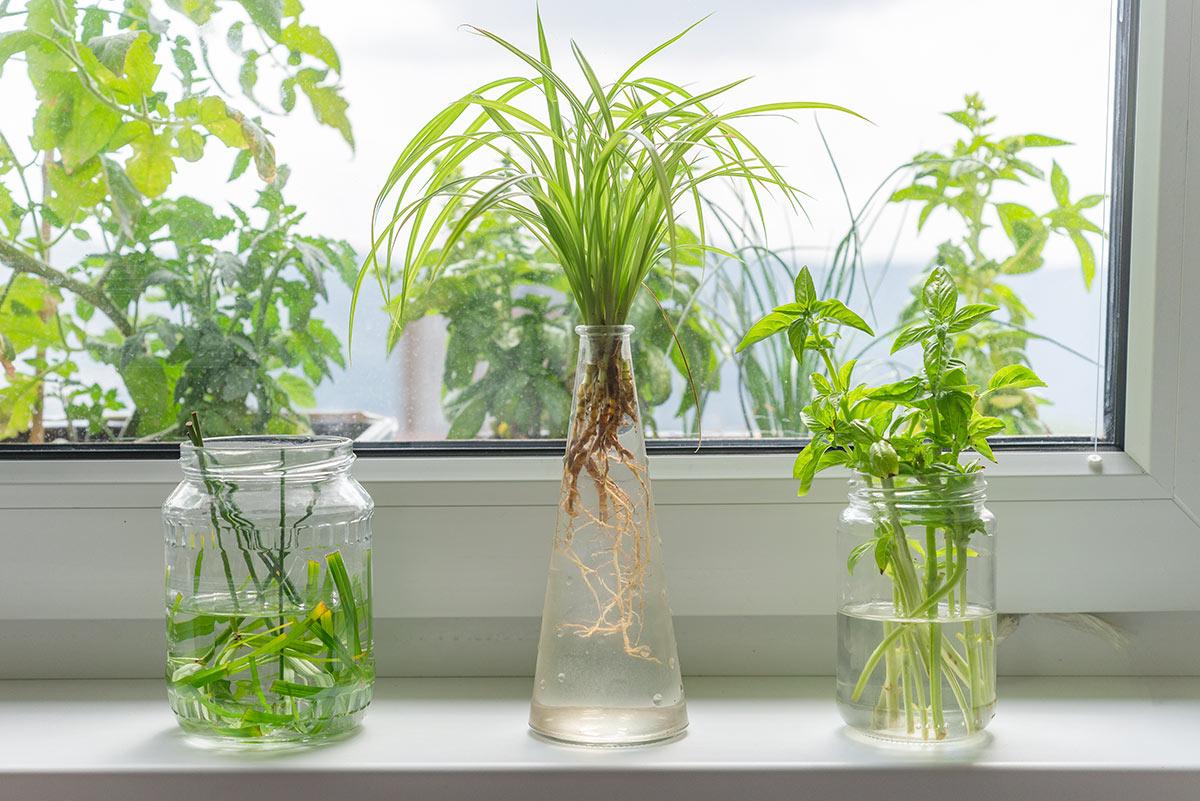 Contenitori di vetro diventano vasetti con fiori.