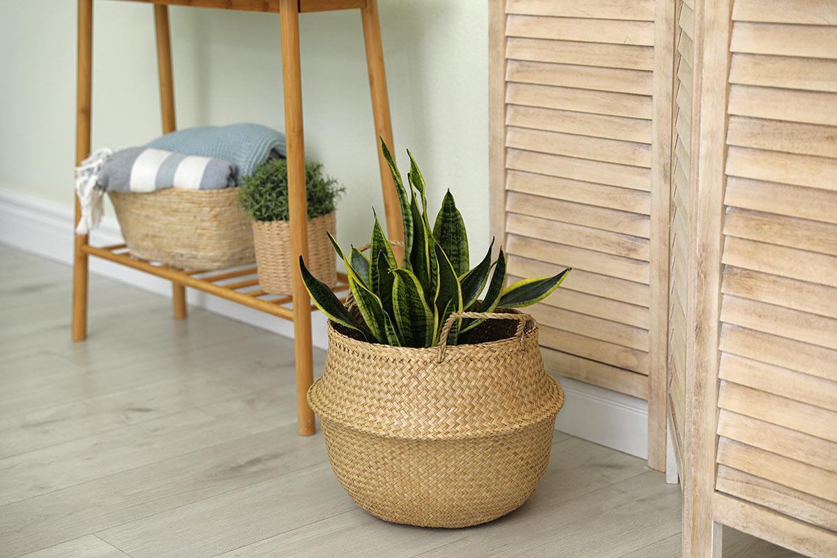 Bel cesto porta pianta in vimini.
