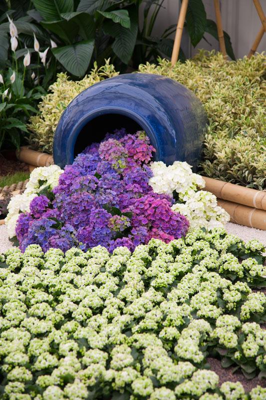 Vaso in giardino con cascata di fiori viola e giallo.