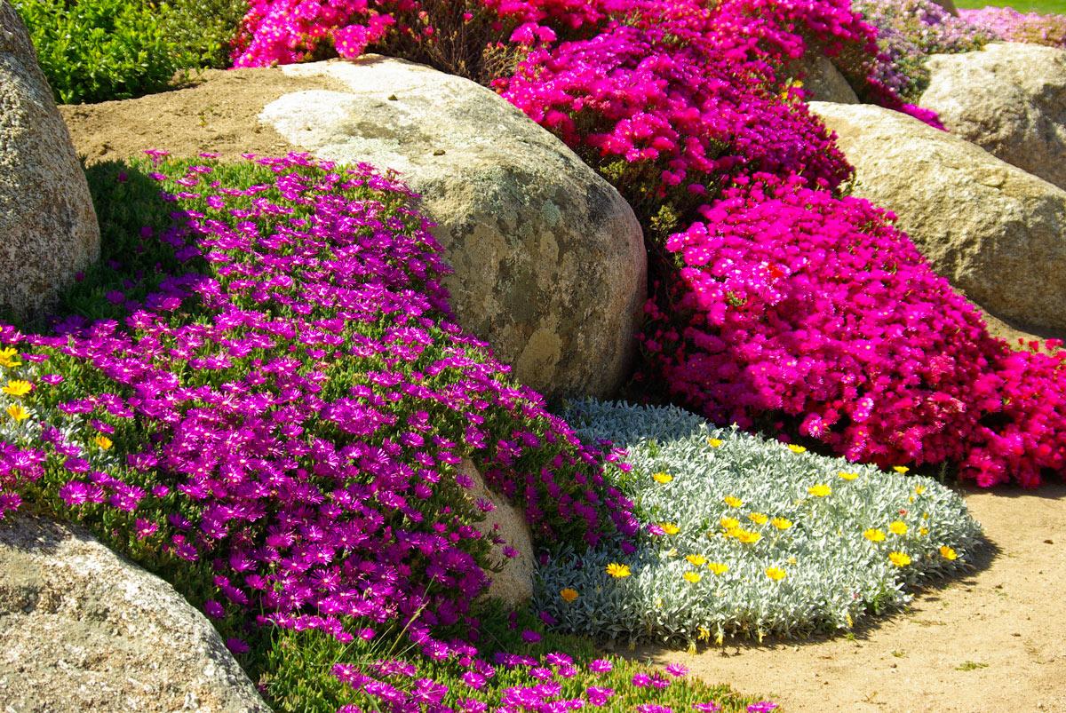 Giardino di pietre con fiori colorate.