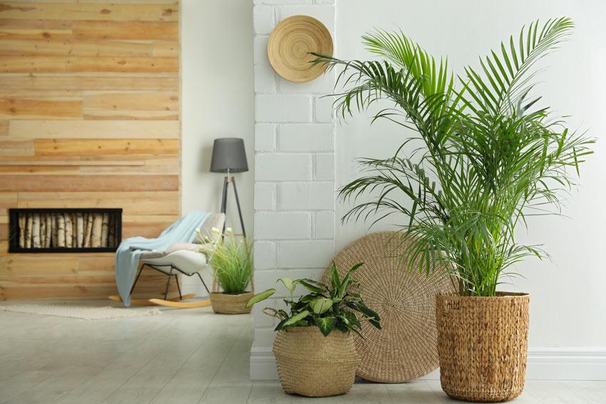 Decorazione casa con vaso in vimini con pianta verde.