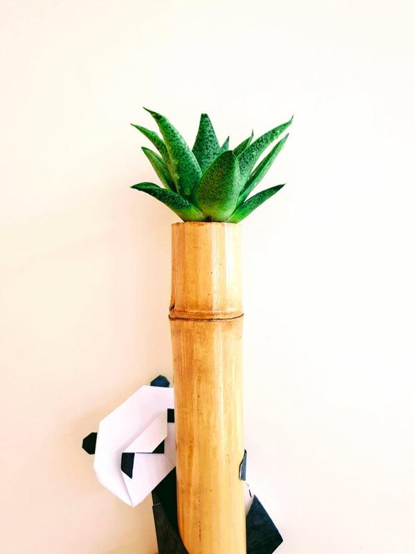 Bambù con piantina grassa.