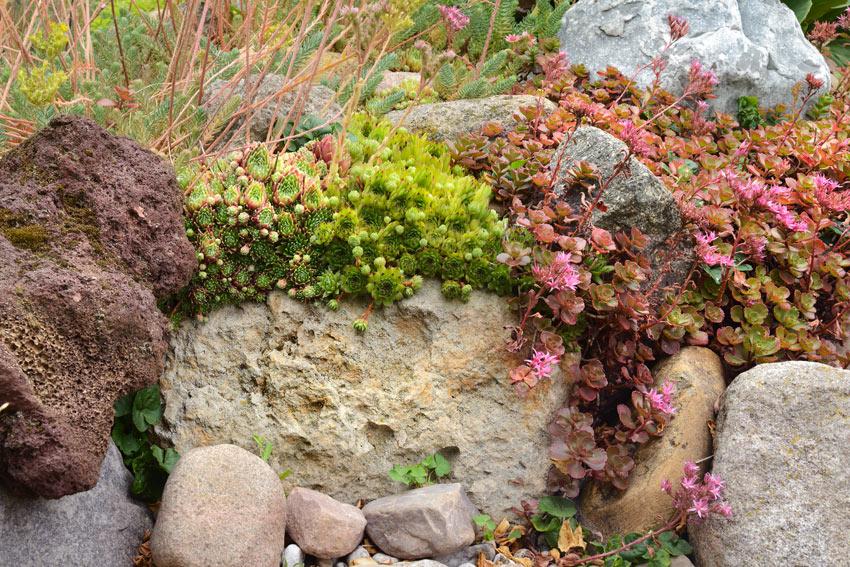 Pietra naturale con piante grasse.