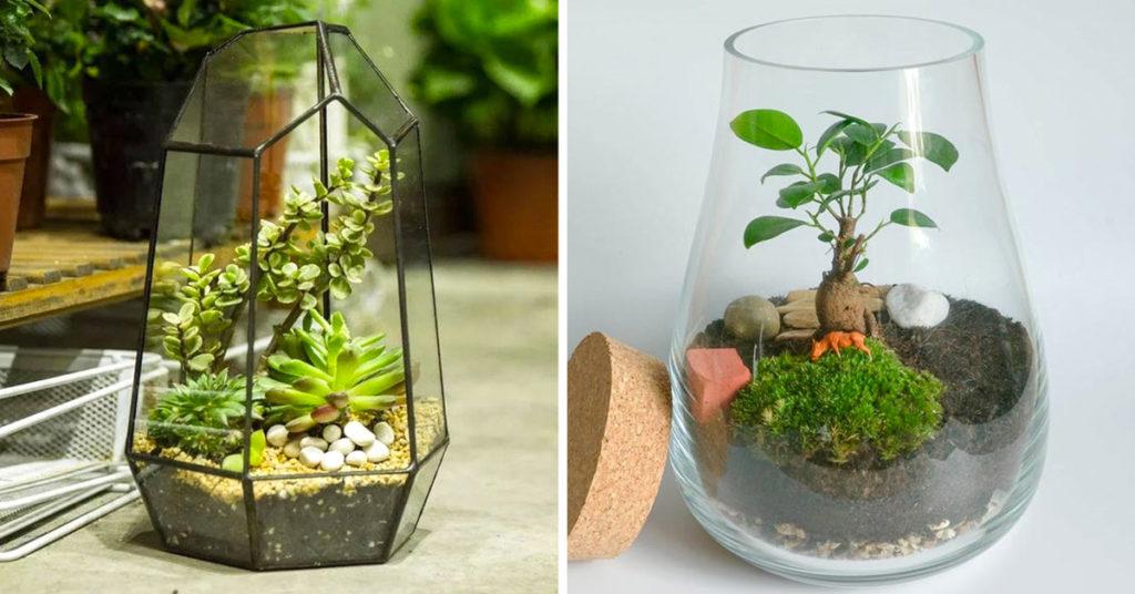 Un terrario fai da te per un tocco green in casa