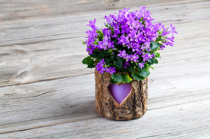 Campanule in vaso in legno realizzato con scorza di albero.