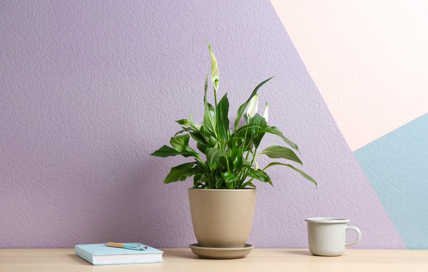 Gigli in vaso, ideale per decorare casa in autunno.