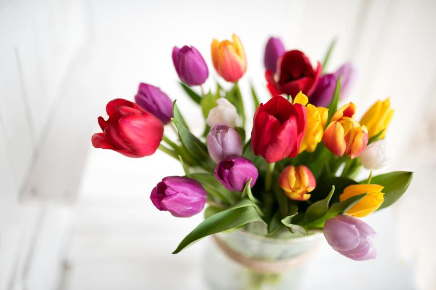 tulipani in un vaso per decorare casa