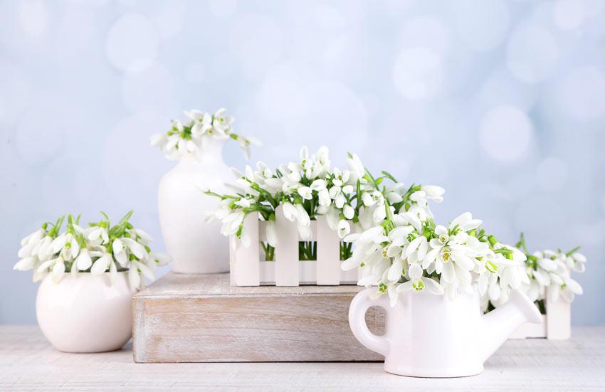 Bucaneneve decorativo in vaso.