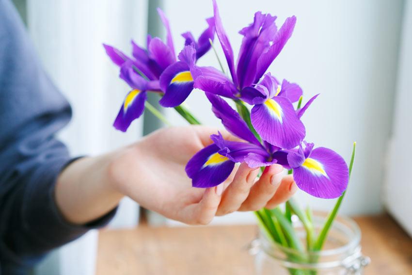 Iris in vaso.