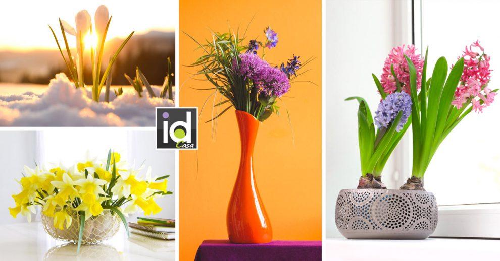 fiori da piantare in autunno, nomi e caratteristiche