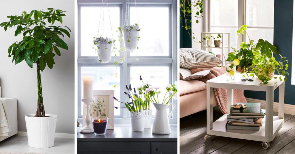 Decorare il soggiorno con piante IKEA.