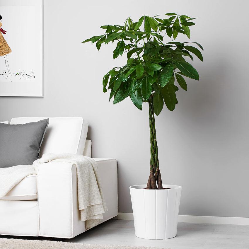 Decorare il salotto con piante IKEA.