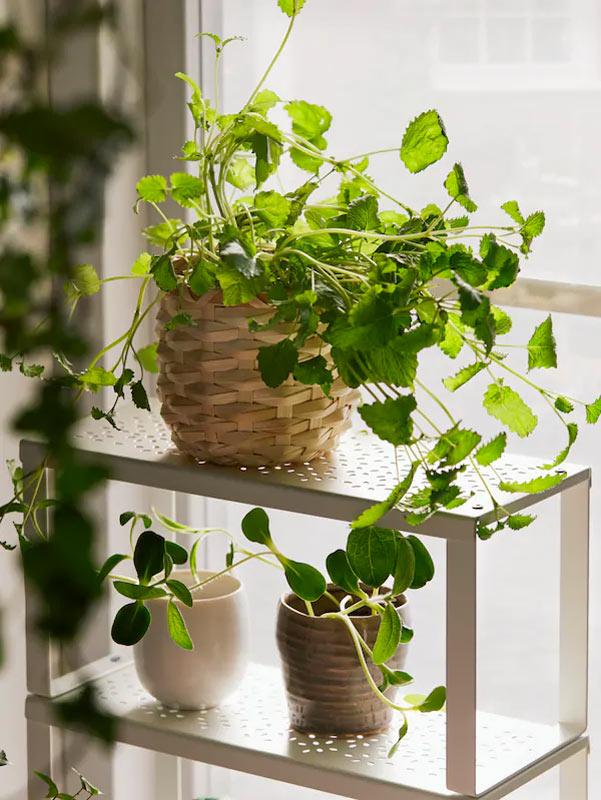 Bellissimo vasetto con pianta firmato IKEA.