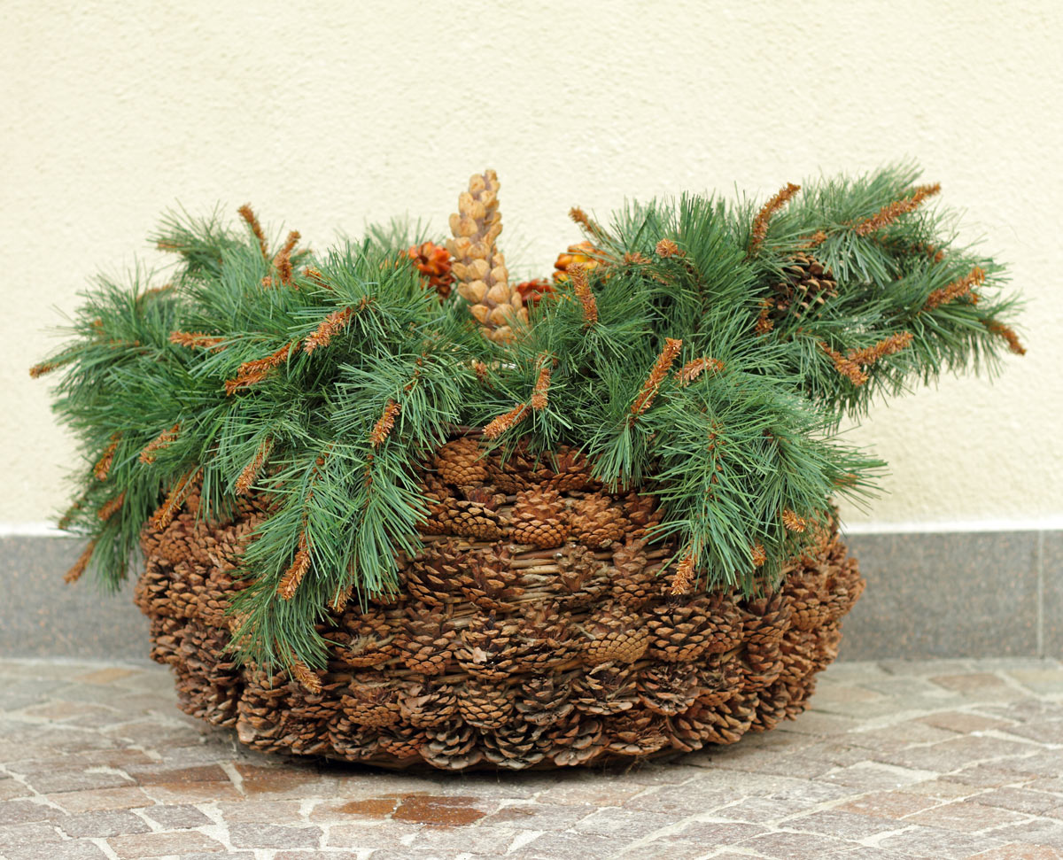 Decorazioni natalizie con elementi naturali.