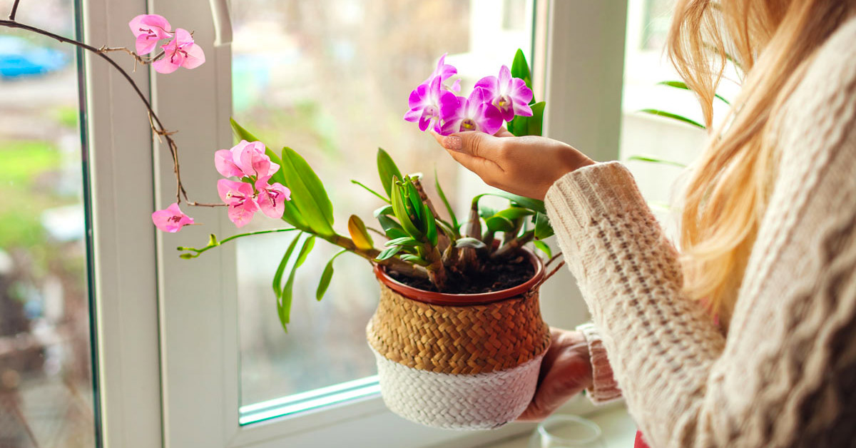piante che assorbono umidità da tenere in casa