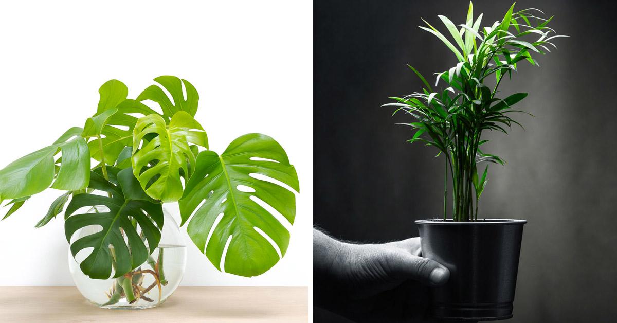 piante da interno che richiedono poca luce