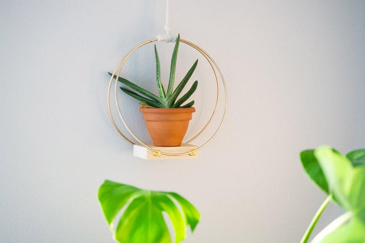 idee creative per decorare le pareti di casa con le piantine