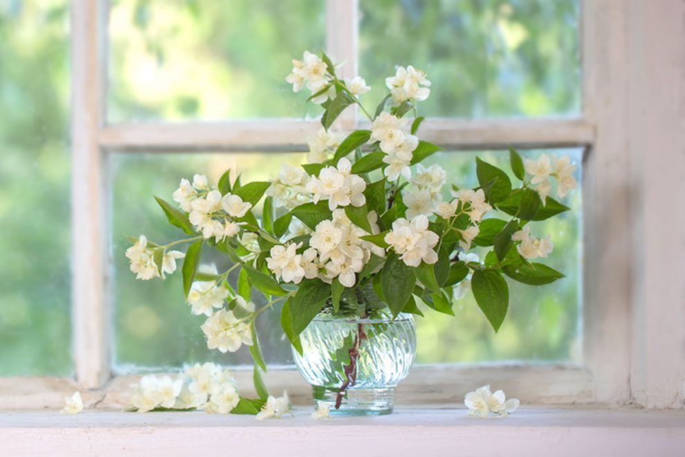 profumare casa con le piante.