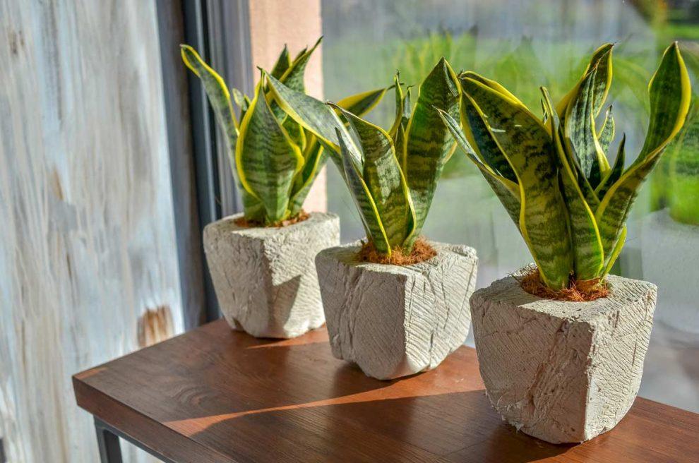 piante da tenere in casa per eliminare umidità e inquinamento