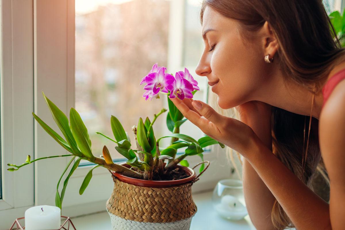 Piante da appartamento con fiori.