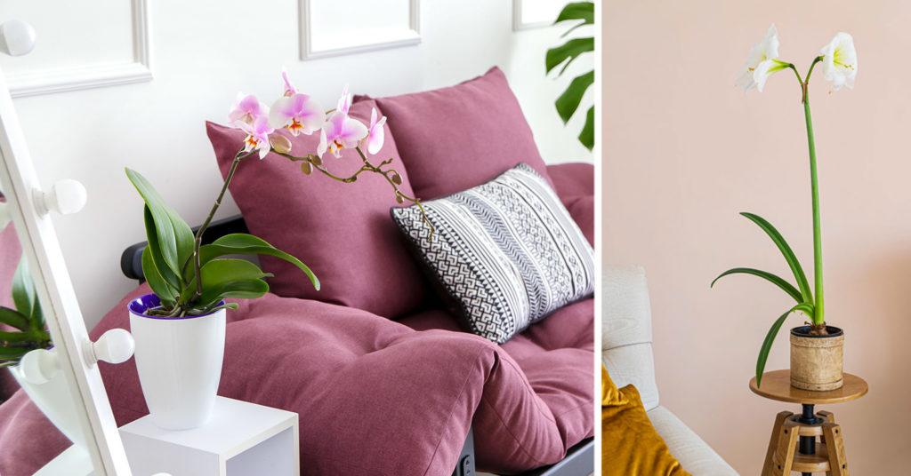 7 piante per un appartamento in fiore: nomi e ispirazioni