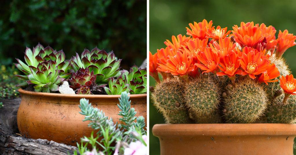 piante grasse da esterno