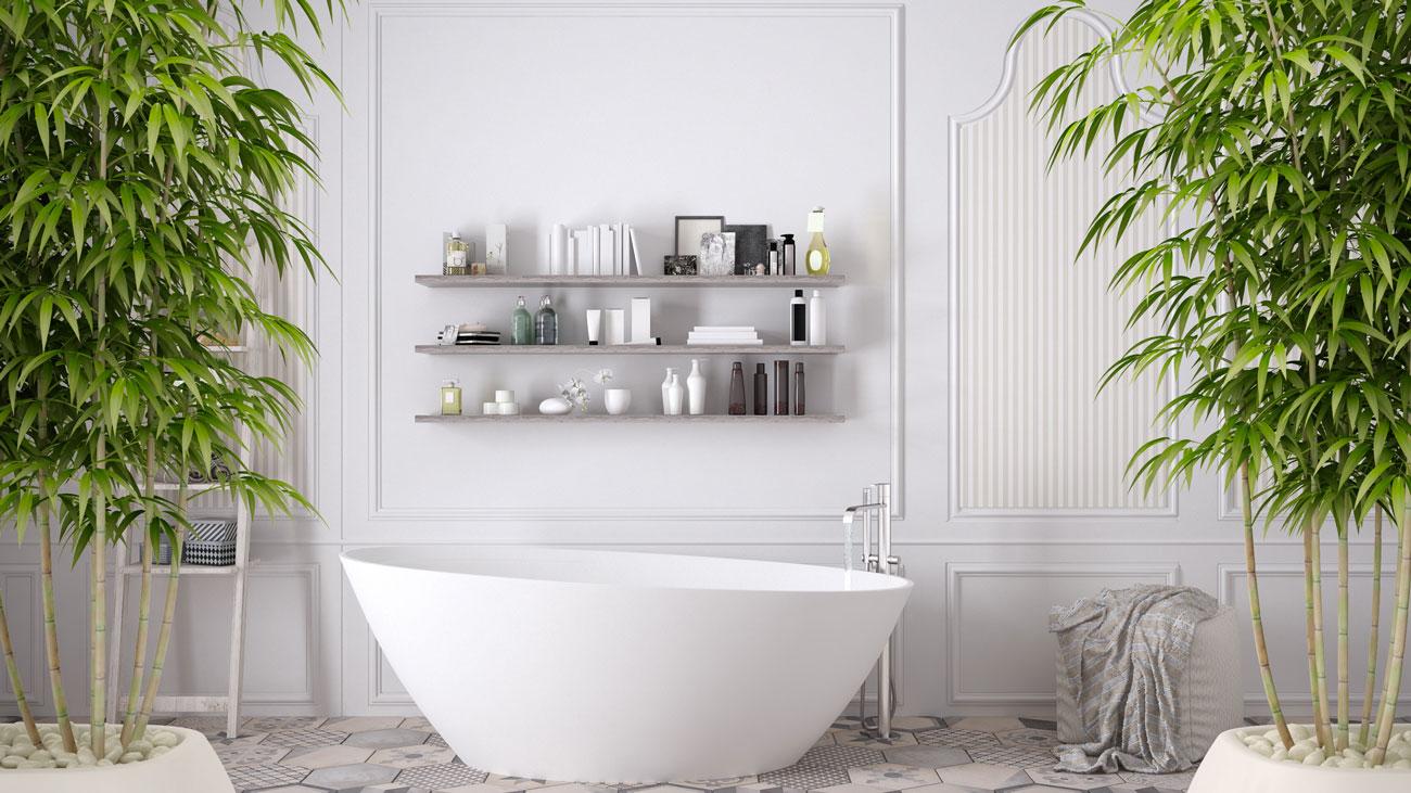 Le piante per il bagno che assorbono l'umidità