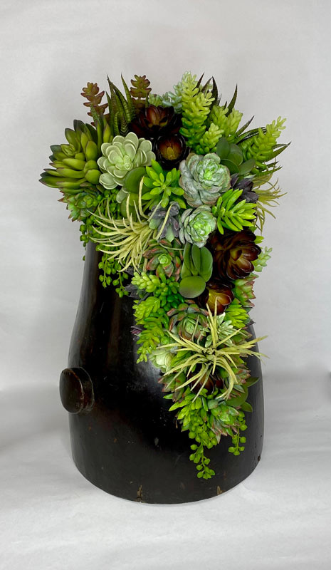 vaso di piantine grasse