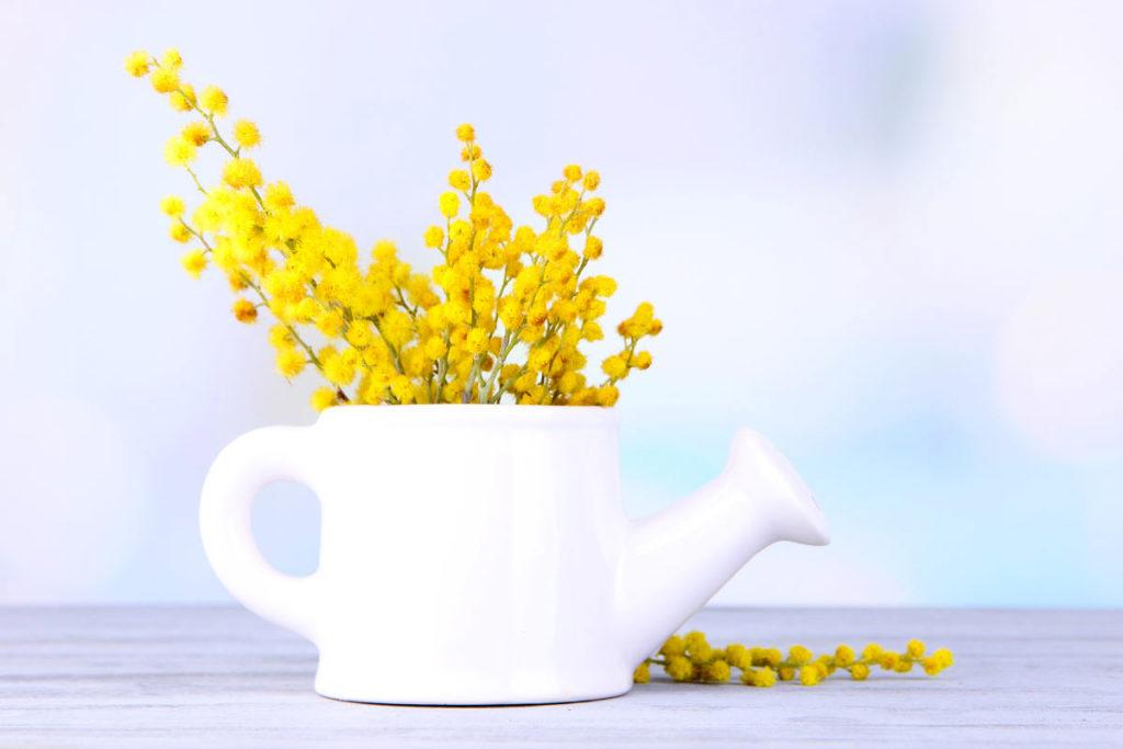 come abbellire casa con i rametti di mimosa