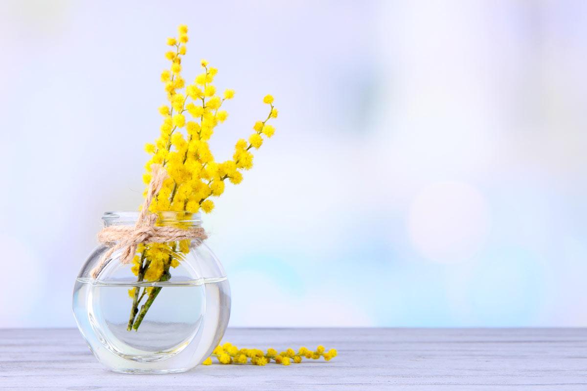 abbellire casa con i rametti di mimosa