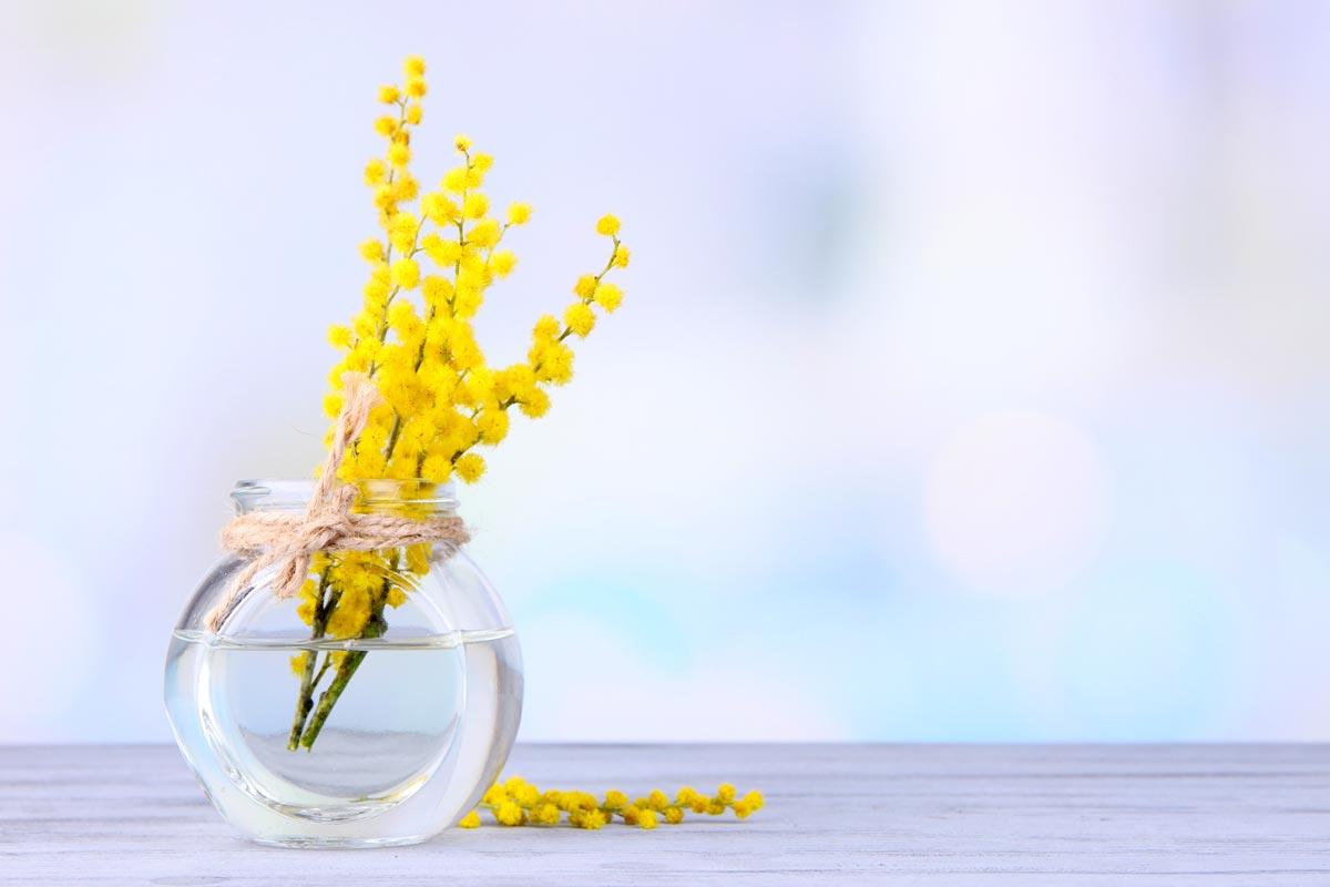 Regalare mimose festa della Donna