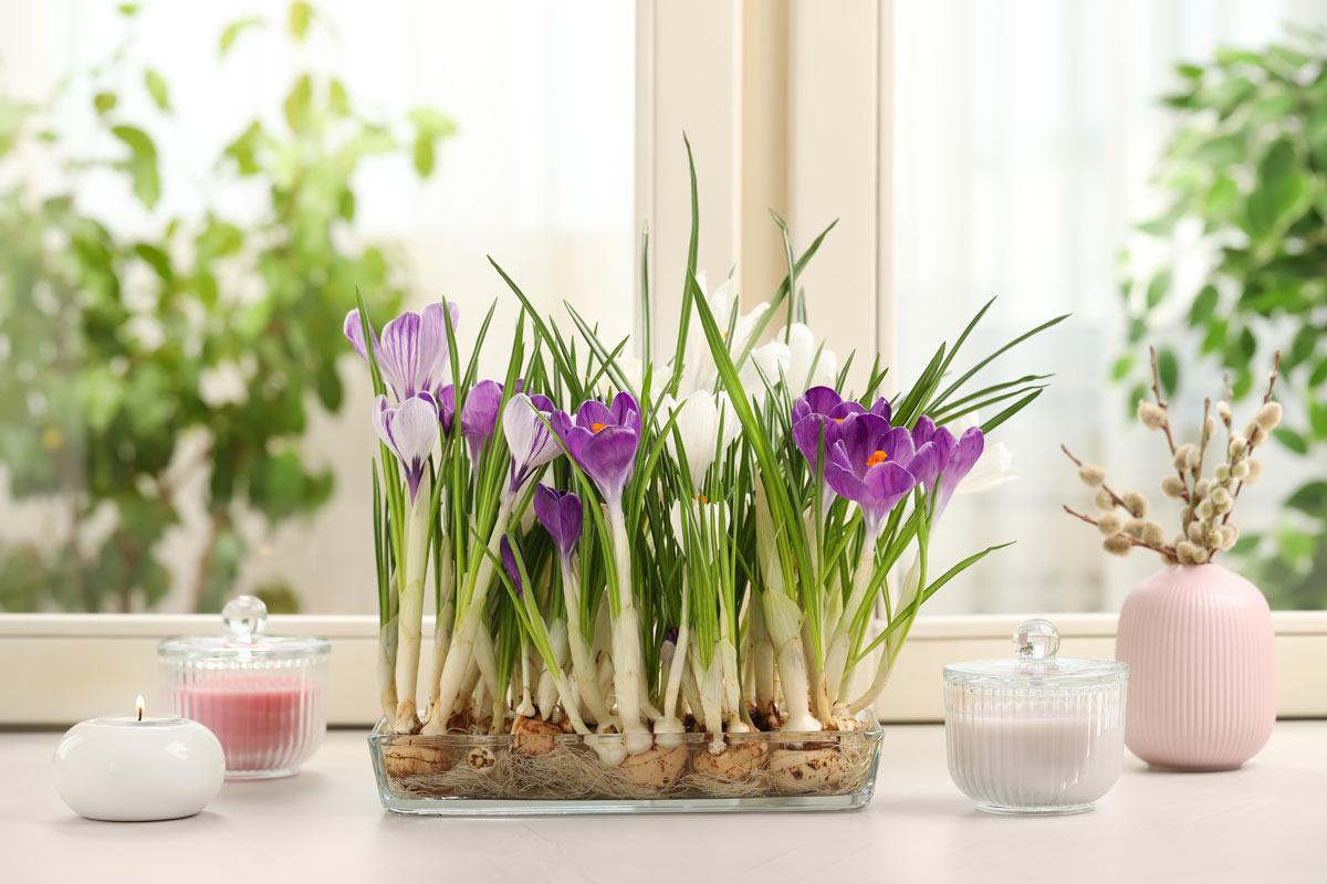 piante bulbose con fiore viola