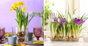piante bulbose con fiore