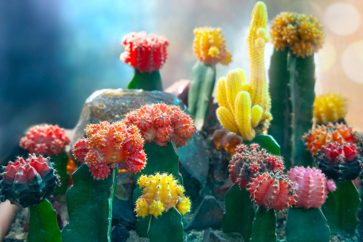 piante grasse rare