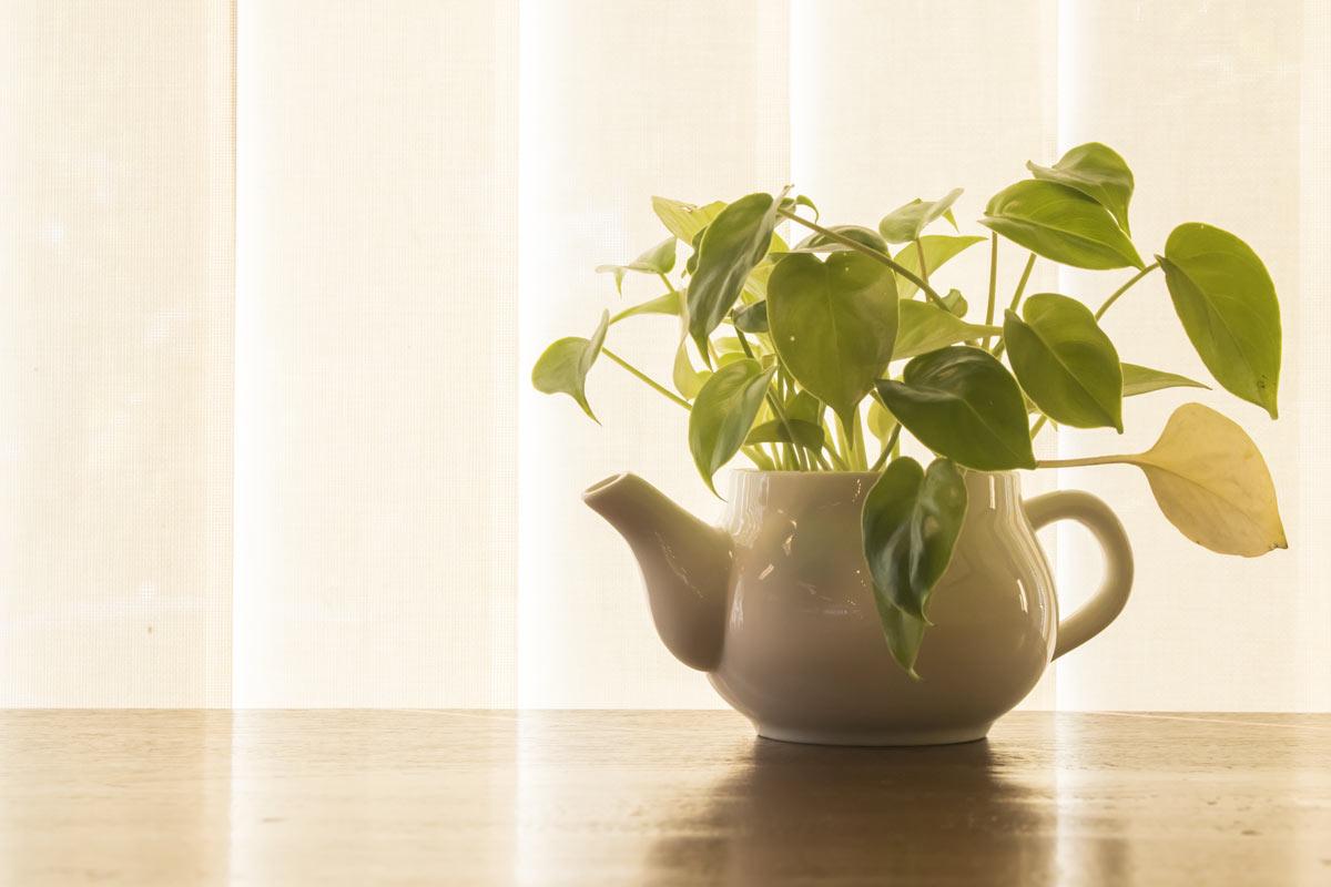 piante da appartamento che richiedono poca acqua